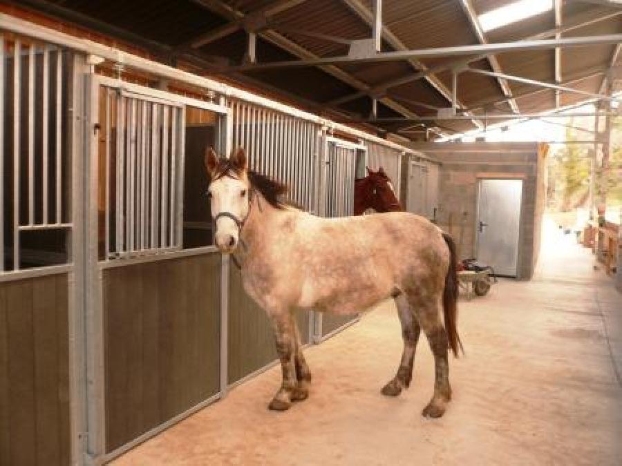 pension cheval à Carcassonne-Verzeille Aude